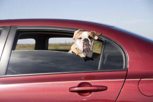 Wenn Sie ein Auto kaufen, ist die Probefahrt eine wichtige Entscheidungshilfe.